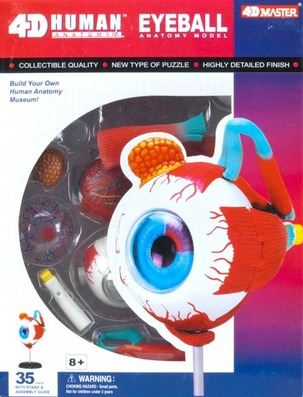 4d Human Eyeball Jigsaw Puzzle Seriouspuzzles
