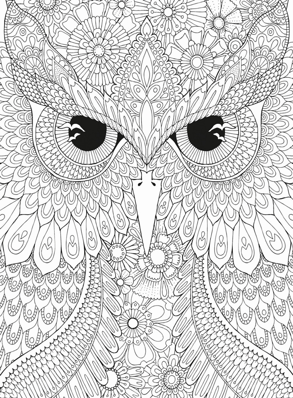 Puzzle Escapes: Owl - 500pc Coloring Jigsaw Puzzle by Masterpieces (discon)