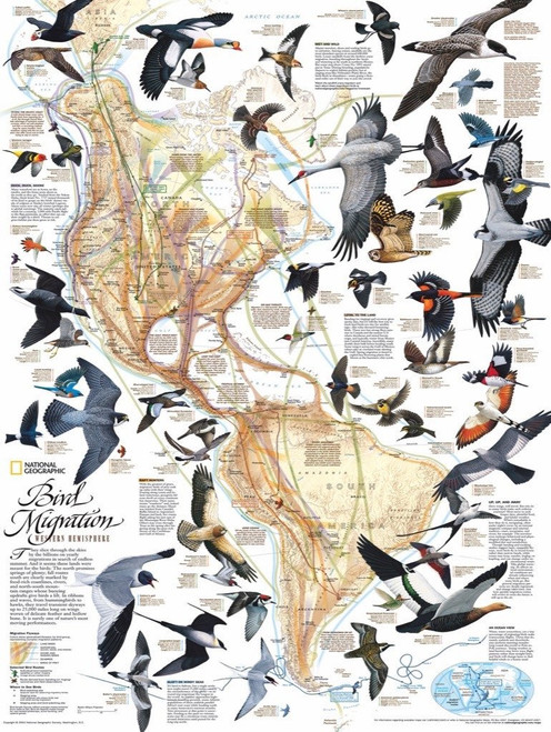 Bird Migration - 1000pc Jigsaw Puzzle by New York Puzzle Company