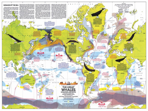 Whale Migration - 1000pc Jigsaw Puzzle by New York Puzzle Company