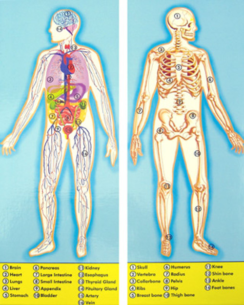 Melissa and Doug Floor Jigsaw Puzzles For Kids - Human Body