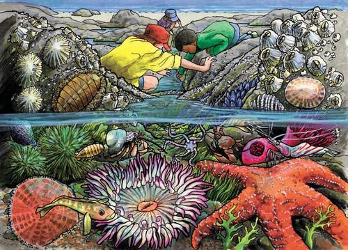 Cobble Hill Children's Puzzles - Exploring the Seashore