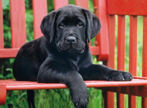 Clementoni The Black Dog Jigsaw Puzzle