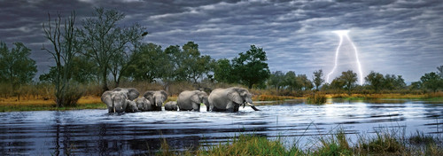 Herd of Elephants - 2000pc Panoramic Jigsaw Puzzle By Heye