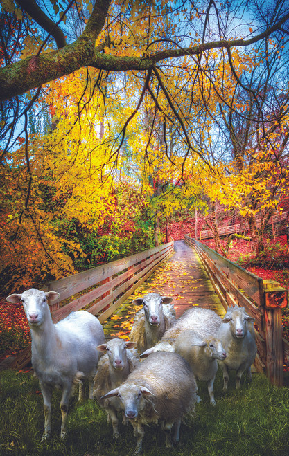 Sheep Crossing - 550pc Jigsaw Puzzle By Sunsout