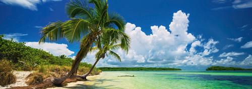 Paradise Palm - 2000pc Panoramic Jigsaw Puzzle By Heye