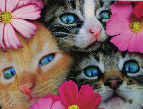 Avanti: Kittens in Flowers - 300pc Large Format Jigsaw Puzzle by Ceaco