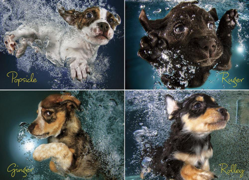 Underwater Puppies - 1000pc Jigsaw Puzzle by Willow Creek
