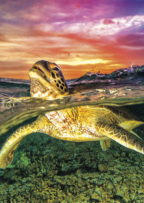 Earthpix: Sea Turtle - 500pc Jigsaw Puzzle by Buffalo Games