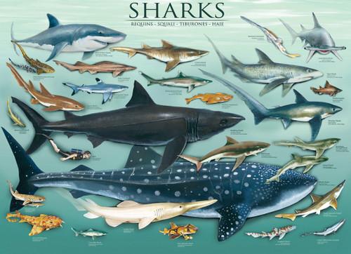 Eurographics Jigsaw Puzzles - Sharks