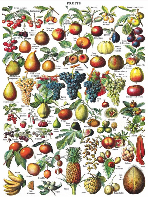 Fruits - 1000pc Jigsaw Puzzle by New York Puzzle Company