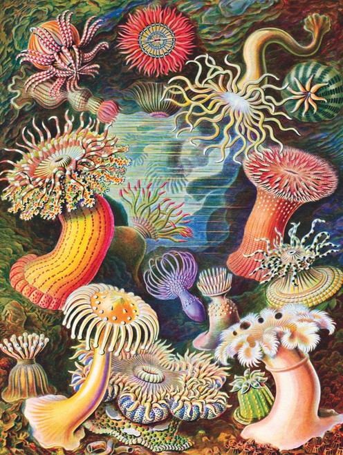 Sea Anemones - 1000pc Jigsaw Puzzle by New York Puzzle Company