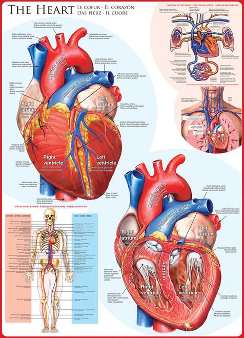 Eurographics Jigsaw Puzzles - The Heart