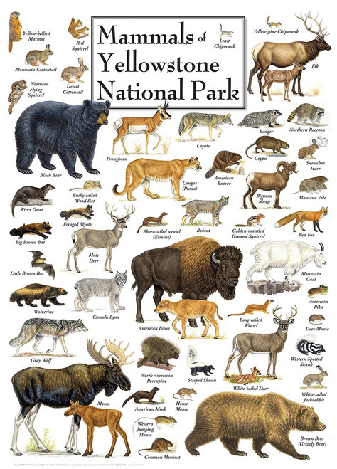 Mammals of Yellowstone National Park - 1000pc Jigsaw Puzzle by Masterpieces