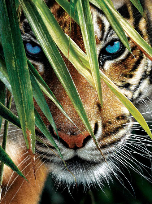 Blue Eyes - 1000pc Jigsaw Puzzle By Sunsout