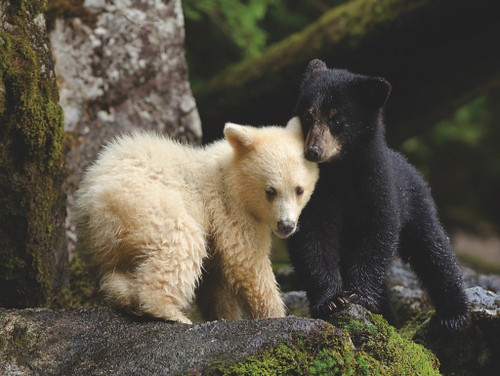 Bear Buddies - 1000pc Jigsaw Puzzle by New York Puzzle Co.