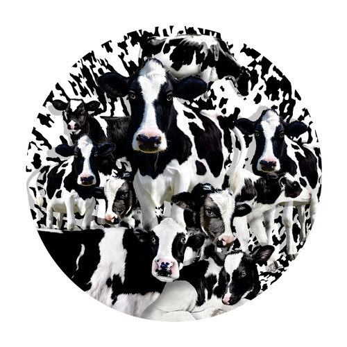 Herd of Cows - 1000pc Jigsaw Puzzle By Sunsout