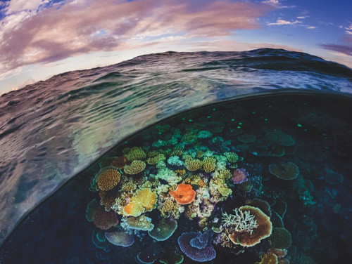 Great Barrier Reef - 1000pc Jigsaw Puzzle by New York Puzzle Co.
