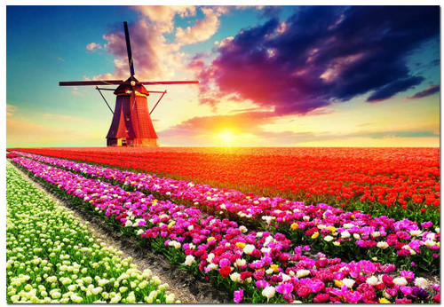 Tulips Landscape - 1500pc Jigsaw Puzzle by Educa
