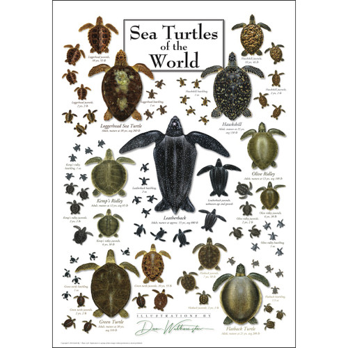 Sea Turtles of the World - 550pc Jigsaw Puzzle by Heritage Puzzle