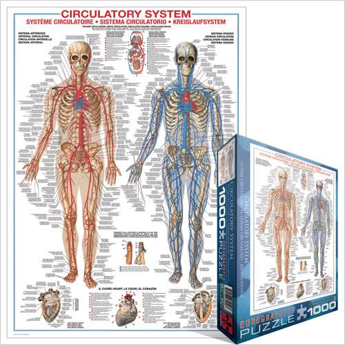 Eurographics Jigsaw Puzzles - Circulatory System