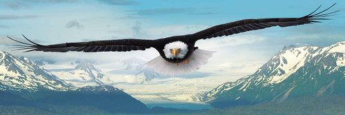 Eagle - 1000pc Panoramic Jigsaw Puzzle by Eurographics