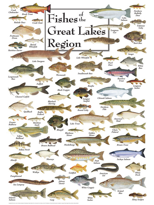 Fishes of the Great Lakes - 550pc Jigsaw Puzzle by Heritage Puzzle