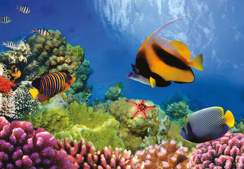 Coral Reef - 1000pc Jigsaw Puzzle by Turner Puzzles