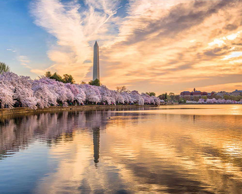 The Tidal Basin - 1000pc Jigsaw Puzzle by Pigment & Hue