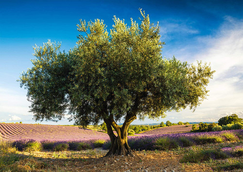 Olive Tree in Provence - 1000pc Jigsaw Puzzle by Schmidt