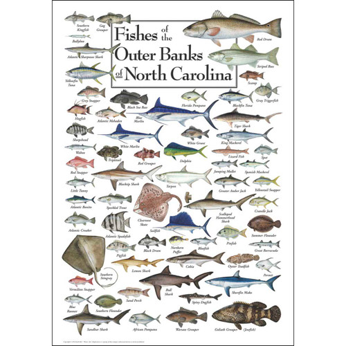 Fishes of the Outer Banks - 550pc Jigsaw Puzzle by Heritage Puzzle