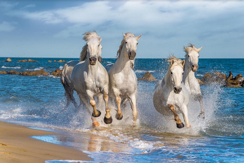 White Horses - 1000pc Jigsaw Puzzle by Tomax