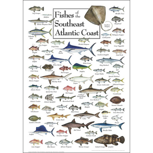 Fish of the South Atlantic Coast   - 550pc Jigsaw Puzzle by Heritage Puzzle