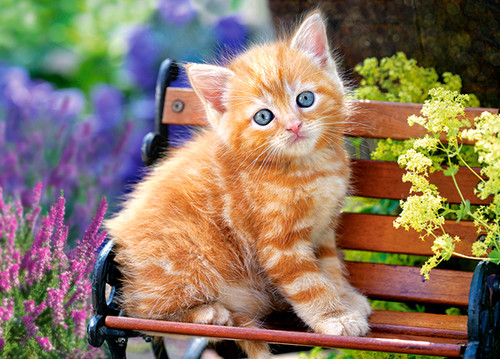 Ginger Kitten - 180pc Jigsaw Puzzle By Castorland