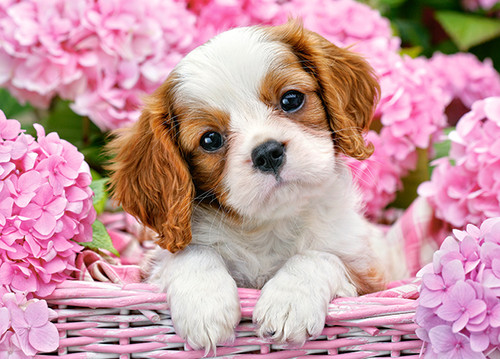 Pup in Pink Flowers - 180pc Jigsaw Puzzle By Castorland