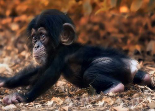 Springbok Monkey Business Jigsaw Puzzle