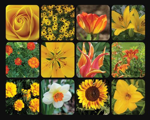 Springbok Golden Blooms Jigsaw Puzzle