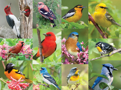 Birds of A Feather - 36pc Jigsaw Puzzle By Springbok