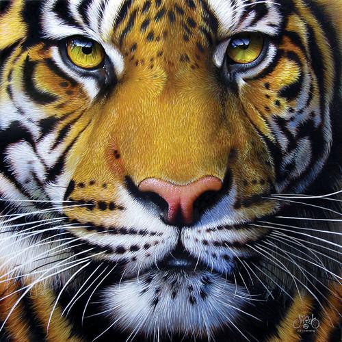 Jigsaw Puzzles - Golden Tiger Face