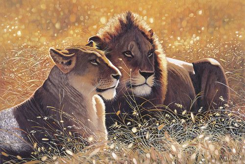 Tomax Jigsaw Puzzles - Lions In The Sun