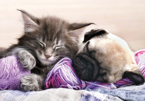 Tomax Jigsaw Puzzles - Kitten Maine Coon and Puppy Pug