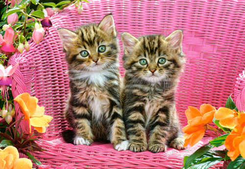 Kittens on Garden Chair - 1000pc Jigsaw Puzzle By Castorland