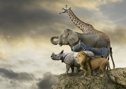 Animals On The Edge Of A Cliff - 500pc Jigsaw Puzzle By Educa
