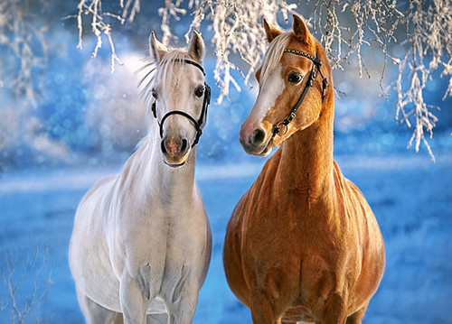 The Winter Horses - 260pc Jigsaw Puzzle By Castorland
