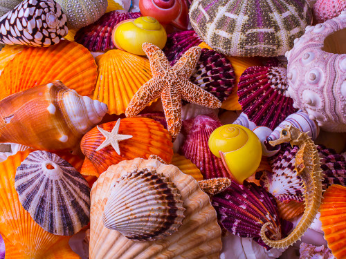 Sea Shell Treasures - 550pc Jigsaw Puzzle by Vermont Christmas Company