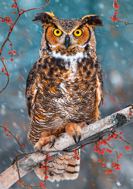 Great Horned Owl - 500pc Jigsaw Puzzle By Castorland