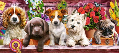 Puppies on a Shelf - 600pc Jigsaw Puzzle By Castorland