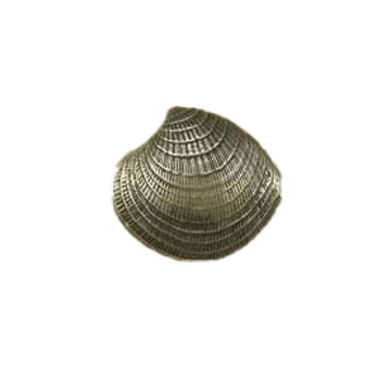 Anne at Home, Clam Shell, Large