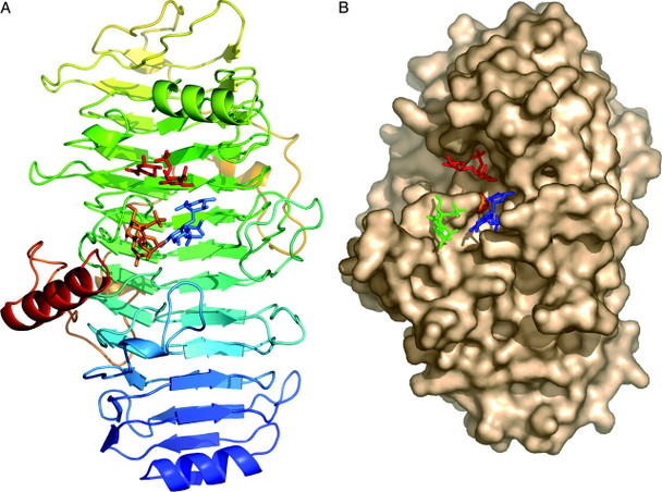 Chondroitinase B from Flavobacterium heparinum 1.0IU - CDB-ENZ