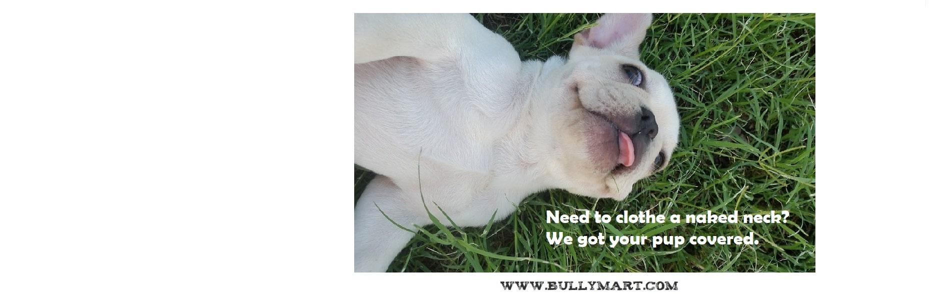 Rose Glen North Dakota ⁓ Try These American Bully Puppies